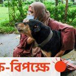 পথকুকুর নিয়ে আন্দোলন : নানা জনের নানা মত